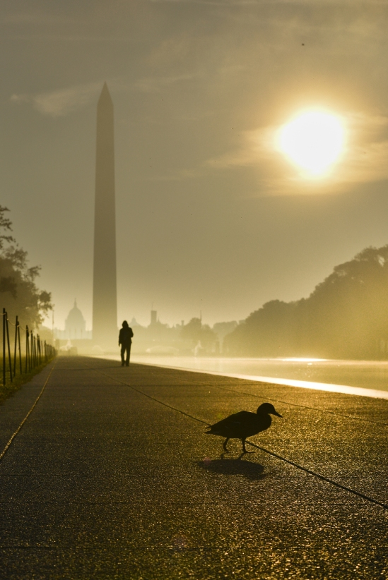 Washington Monument in a misty sunrise as seen from National Mal